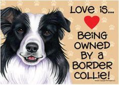 Terrific Cost-Free Border Collies quotes Strategies The Edge Collie hails in the borderlands connected with Great britain and Scotland (hence the actual identify! Border Collie Facts, Border Collie Puppies, Collie Mix, Border Collies, Blue Merle, Pet Dogs, Dog Cat, Doggies, Pet Pet