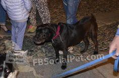 """MANIFESTAZIONE IN RICORDO DEI CANI DI """"RIFUGIO ITALIA"""" DI ANDREA CISTERNINO » Fbsocialpet.com: il social forum per cani, gatti, cavalli, tutti gli animali"""