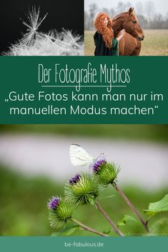 Dieser Post dient dazu, einen Mythos aus dem Weg zu räumen: Den Mythos, dass man nur im Manuellen Modus der Kamera tolle Fotos machen kann. #mythos #manuellermodus #fotografie #tutorial Photography Hacks, Travel Photography, Bokeh, Photo Hacks, Picture Stand, Photoshop, Take Better Photos, Travel Images, Professional Photography