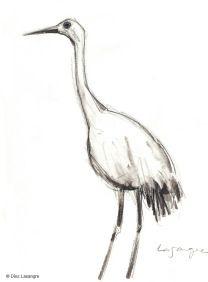 Grulla / Crane. Sketch made at Henry Villas Zoo, Madison (WI).