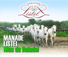 THE Highlight - La Cabane de Daladel en Camargue - Listel