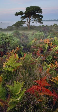 Autumn Ferns - Hampshire, England