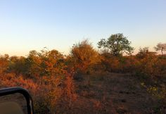June - beautiful Mopani colours in the winter.