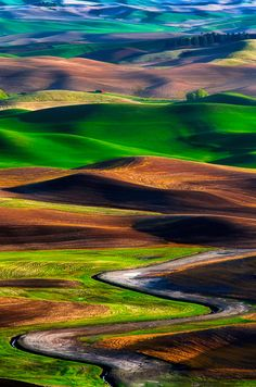 Palouse In May