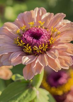 Morning Zinnias Greeting Card for Sale by Bruce Frye