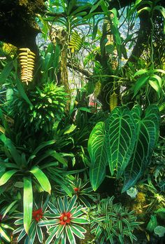 In what was not too long ago a dry ex-stone quarry, Lady Walton, an Argentinian, created the lush feeling of a tropical jungle.