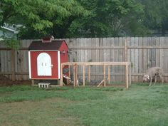 Many areas allow up to 5 chickens at your private residential area. I want some! This is a nice small coop, all enclosed. Even the dog can't get to the chickies.