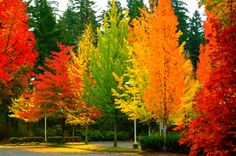 Colours of fall!