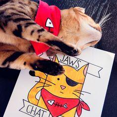 Foulard / Bandana pour chat et petit chien Jaws le par JawsLeChat