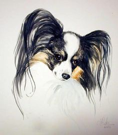 146 best papillion art images on pinterest in 2018 papillon dog studio limage collectible dog art and papillon figurines by nancy pinke with photos of art work solutioingenieria Images