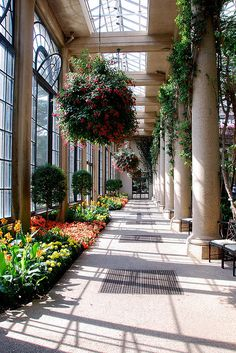 Conservatory at Longwood Gardens, Newtown Square, PA^ Indoor Garden, Home And Garden, Garden Design, House Design, Loft Design, Design Design, Longwood Gardens, Public Garden, Glass House