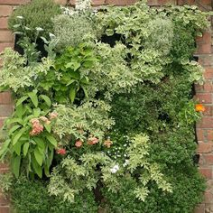 Doityourself - 2/3 - Living walls and Vertical Gardens