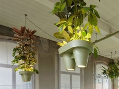 Bucketlight grows plants to liven up green-starved offices. Leave it to the Dutch to come up with something this ultimately COOL!