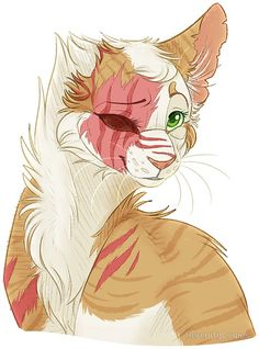 Brightheart is beautiful!!!!!!!!!!!!!!!!!