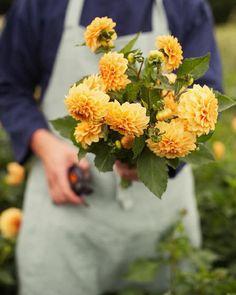 Beautiful Gardens, Beautiful Flowers, Petal Pushers, Slow Living, Flower Power, Herbs, Fruit, Plants, Cottage