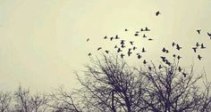 A picture in a wild forest filled with birds flying through the sky being free and themselves. Fb Cover Photos, Facebook Timeline Covers, Photos Tumblr, Fb Covers, Book Covers, Cover Art, Free Images, Sky, Nature
