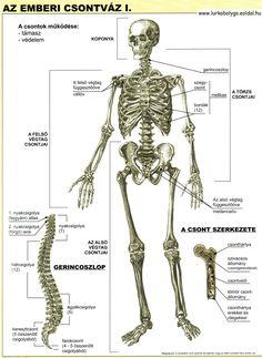 Anatomy Art, Massage Therapy, Chemistry, Online Marketing, Cute Pictures, Preschool, Science, Album, Teaching
