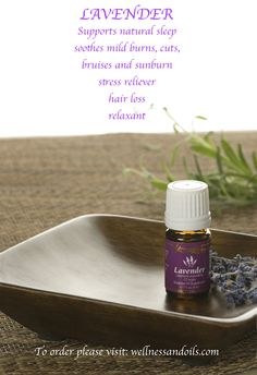 Lavender   Dayna's Young Living member #1893605