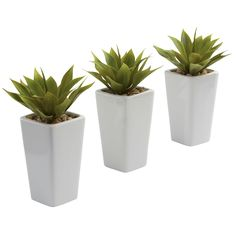 These charming mini agave planter sets will enliven the decor of any home or office space. Featuring three delicate, supple agave plants, these sweet arrangements are complete with three white planters making the green leaves pop for an enticing accent.