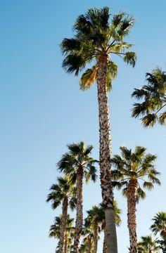 Las Vegas palms-sure miss those