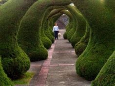 """""""High in the mountains of Costa Rica, in the small town of Zarcero, sits a fancifully sculpted topiary garden in front of its picturesque little church: bushes shaped into gigantic green rabbits, monkeys, ox carts, elephants and more. The Zarcero Park topiary garden has been lovingly created by Don Evangelista Blanco, the park gardener, who clips and prunes the Cypress bushes and hedges, into a whimsical garden of amazing creatures. """""""