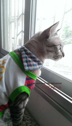 Love is all around : ) #coco #kiwi #cat #catlover #CraftingMode