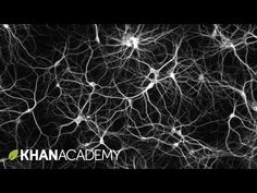 How to grow your brain - YouTube