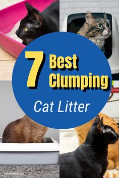 What is the best clumping cat litter for your fur baby? Discover some of the best clumping cat for tracking, stopping odor, and is eco-friendly. #clumpingcatlitter #catlitter #whatisthebestclumpingcatlitter #cat Best Cat Litter, Cat Litter Cabinet, Cat Litter Tray, Cat Tracker, Cat Scratching Post, Cat Life, Cool Cats, Eco Friendly