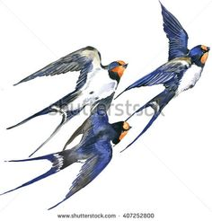 Find Swallow Watercolor Illustration Cute Bird stock images in HD and millions of other royalty-free stock photos, illustrations and vectors in the Shutterstock collection. Minimal Drawings, Girly Drawings, Watercolor Illustration, Watercolor Paintings, Pencil Drawings Of Animals, Sparrow Tattoo, Sketch Painting, Cute Birds, Bird Patterns