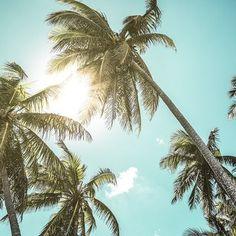 #PARADISE by @martin_roehr #Photocircle #nofilter #Bahamas #LatinAmerica #GreatExuma #beach #sea #seaside #sunlight #sunrays #summer #travelphotography #palmtree #holidays #island #carribean #green #mint #blue