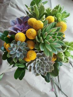 Craspedia flowers and succulents