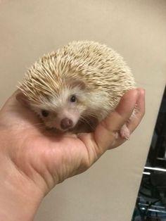 22Hedgehog Day