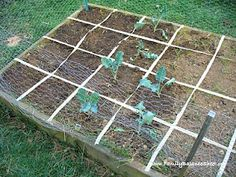Square Foot Gardening: Making a Transition
