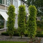 Deck Enclosures, St Albans, Garden Beds, Garden Design, Landscaping, Yard, Cottage, Gardening, Plants