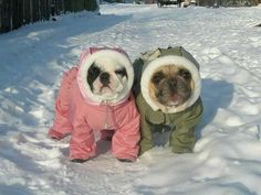 """Dis is Saul, n Dis is Rose, """"we've been together what Rose?, 8 years?"""" Yes, Saul 8 years. Adorable French Bulldog Couple❤️"""