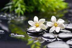 Zen Garden – Two Gardenia flowers on therapy stones
