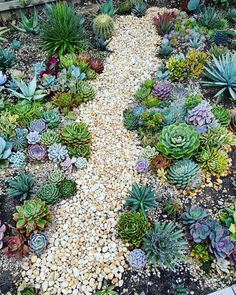 Windowsill garden - imagine a path full of succulents!, Windowsill garden - imagine a path full of succulents! - Windowsill garden – imagine a path full of succulents! Succulent Landscaping, Succulent Gardening, Cacti And Succulents, Planting Succulents, Garden Landscaping, Propagate Succulents, Landscaping Ideas, Succulent Rock Garden, Flowers Garden