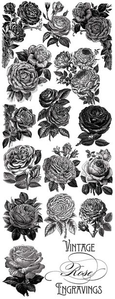 Vintage Rose Vector Graphics - Objects
