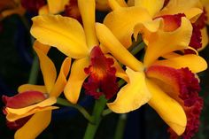 Orange Orchid Orange Orchid, Flowers For You, Wonderful Picture, Flower Pictures, Orchids, Plants, Photos Of Flowers, Lily, Plant