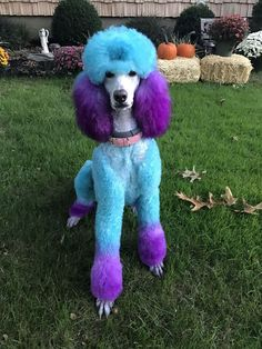 Some of the things we respect about the Proud Poodle Pup Dog Grooming Styles, Poodle Grooming, Cat Grooming, Grooming Shop, I Love Dogs, Cute Dogs, Poodle Haircut, Poodle Cuts, Creative Grooming