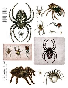 "Halloween Spider images Vintage goth arachnids Digital collage sheet Scrapbooking Decoupage Book scan Download printable 8.5""x11"" jpg /s002"
