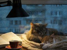 Rain, tea, cats, book. http://amzn.to/2qVpaTc