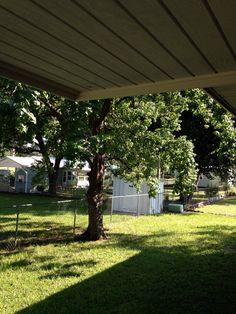 Citrus Springs / my back yard.