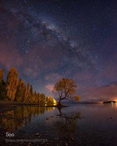 Dreamy Tree by Kucau