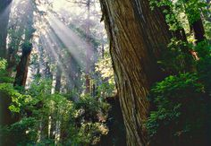 Redwoods. From CA all the way up the coast are beautiful pockets of redwood forests. Serene place for a picnic or hike.
