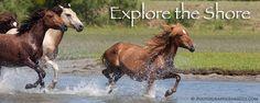 Chincoteague Island, Virginia especially during the Wild Pony Run on Assateague