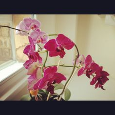 Orchids in the Handpicked Collection office