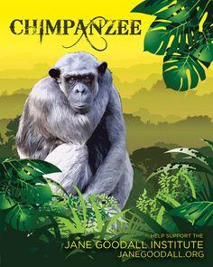 UHGAP & Houston Zoo, Chimpanzee - Ty Summers