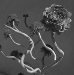 The closest I came to paradise - Alberto García Alix Garcia Alix, Alberto Garcia, Spanish Eyes, Chiaroscuro, Closer, Art Photography, Paradise, Black And White, Nature