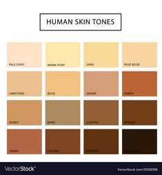 Seasonal color analysis palette for light summer vector image on VectorStock Skin Color Palette, Palette Art, Brown Skin, Dark Skin, Human Skin Color, Colors For Skin Tone, Different Skin Tones, Color Vector, Vector Art
